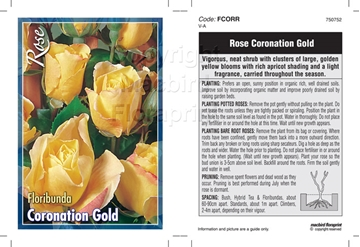 Picture of ROSE CORONATION GOLD (FL)