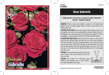 Picture of ROSE GABRIELLA (FL)