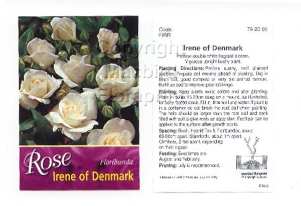 Picture of ROSE IRENE OF DENMARK (FL)