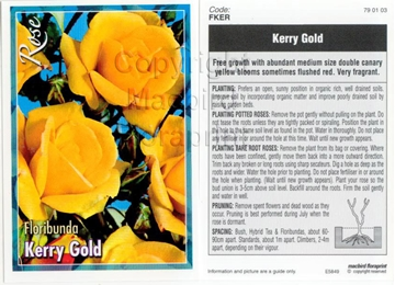 Picture of ROSE KERRY GOLD (FL)
