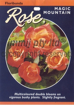 Picture of ROSE MAGIC MOUNTAIN (FL)