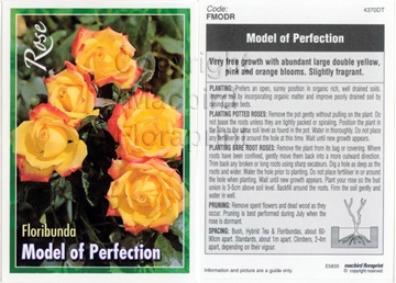 Picture of ROSE MODEL OF PERFECTION (FL)