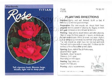 Picture of ROSE TITIAN (FL)