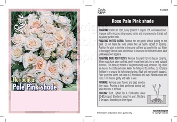 Picture of ROSE PALE PINK SHADE (UNNAMED VARIETY) (FL)