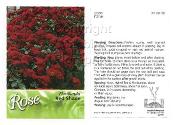 Picture of ROSE RED (UNNAMED VARIETY) (FL)