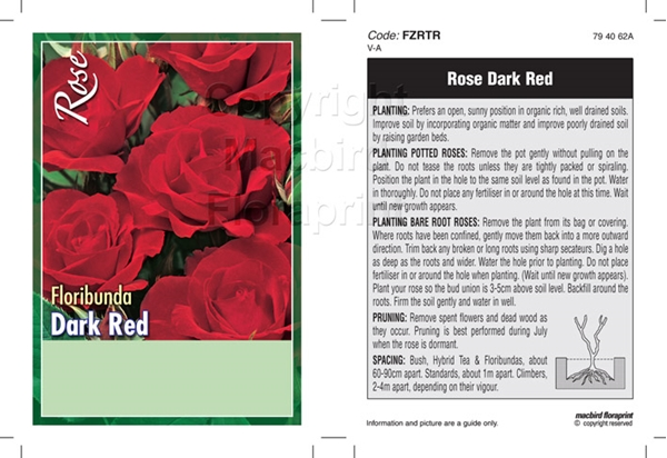 Picture of ROSE DARK RED (UNNAMED VARIETY) (FL)