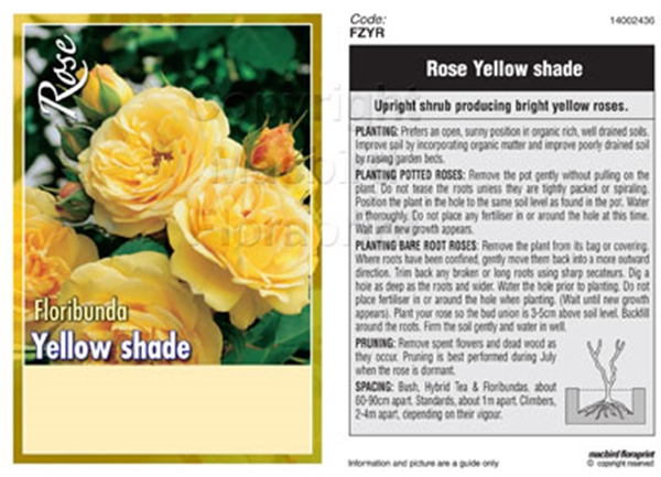 Picture of ROSE YELLOW (UNNAMED VARIETY) (FL)