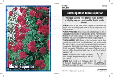 Picture of ROSE BLAZE SUPERIOR (CL)