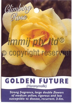 Picture of ROSE CL GOLDEN FUTURE