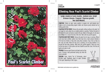 Picture of ROSE CL PAULS SCARLET CLIMBER