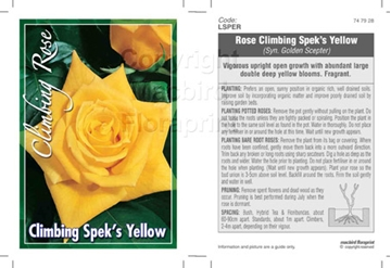 Picture of ROSE CL SPEKS YELLOW