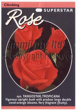 Picture of ROSE CL SUPER STAR