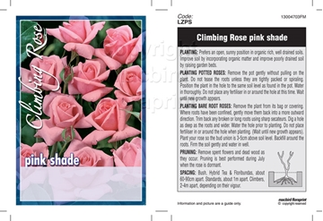 Picture of ROSE CL PINK (UNNAMED VARIETY)