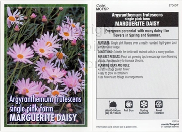 Picture of ARGYRANTHEMUM FRUTESCENS SINGLE PINK MARGUERITE