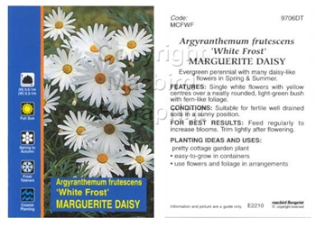 Picture of ARGYRANTHEMUM FRUTESCENS WHITE FROST