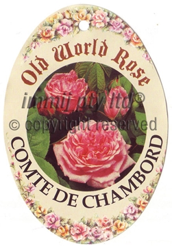 Picture of ROSE COMTE DE CHAMBORD (OW)