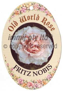 Picture of ROSE FRITZ NOBIS (OW)