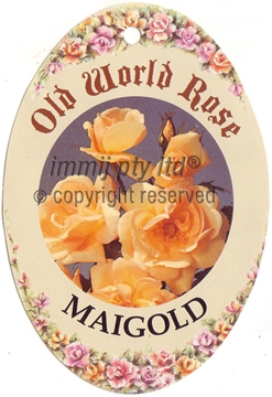 Picture of ROSE MAIGOLD (OW)