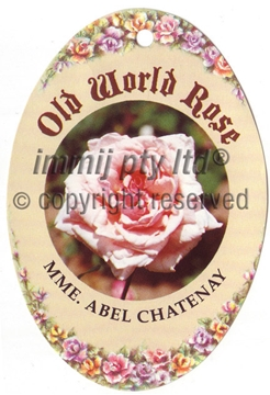 Picture of ROSE MME ABEL CHATENAY (OW)