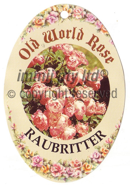 Picture of ROSE RAUBRITTER (OW)