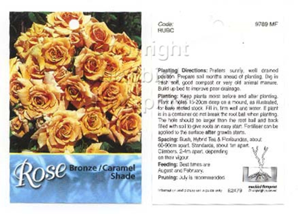 Picture of ROSE BRONZE CARAMEL (UNNAMED VARIETY)