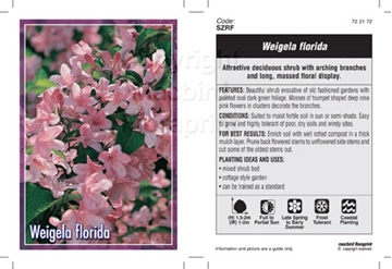 Picture of WEIGELA FLORIDA