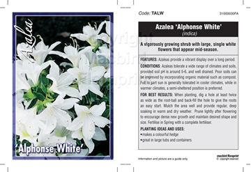 Picture of AZALEA ALPHONSE WHITE