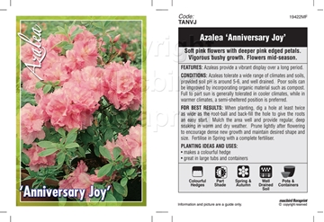 Picture of AZALEA ANNIVERSARY JOY