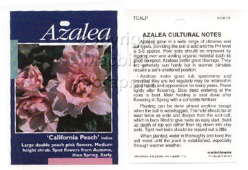 Picture of AZALEA CALIFORNIA PEACH