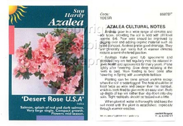 Picture of AZALEA DESERT ROSE USA