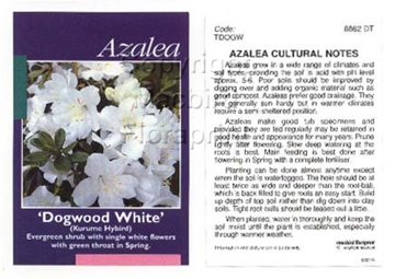 Picture of AZALEA DOGWOOD WHITE