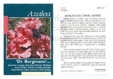 Picture of AZALEA DR BERGMANN