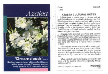 Picture of AZALEA DREAMCLOUDS