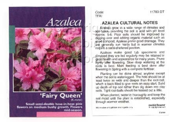 Picture of AZALEA FAIRY QUEEN