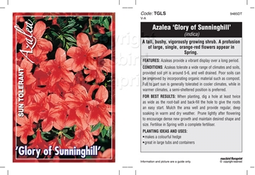 Picture of AZALEA GLORY OF SUNNINGHILL