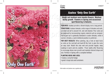 Picture of AZALEA ONLY ONE EARTH