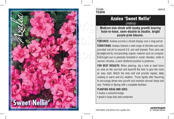 Picture of AZALEA SWEET NELLIE
