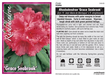 Picture of **RHODODENDRON GRACE SEABROOK