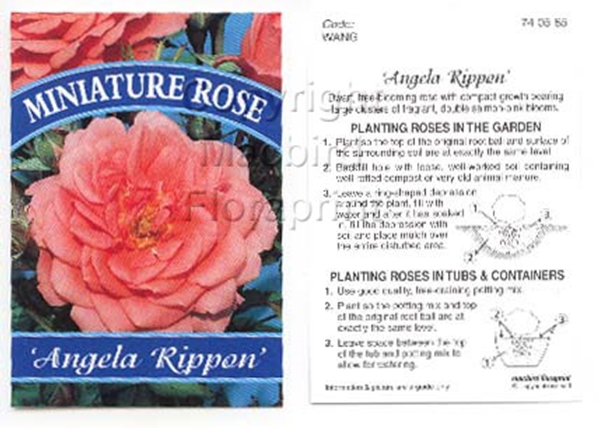Picture of ROSE MINI ANGELA RIPPON