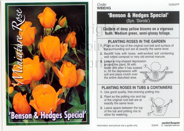 Picture of ROSE MINI BENSON & HEDGES SPECIAL
