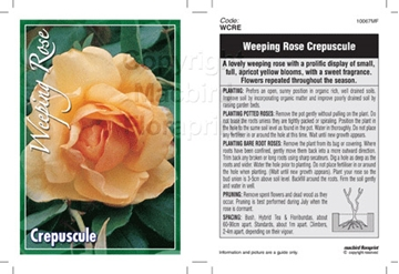 Picture of ROSE CREPUSCULE (WEEPING)