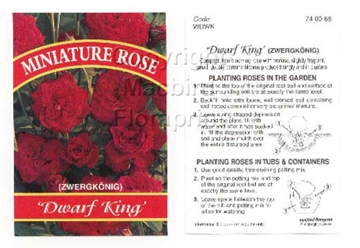 Picture of ROSE MINI DWARF KING