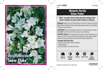 Picture of WEIGELA FLORIDA SNOW FLAKE