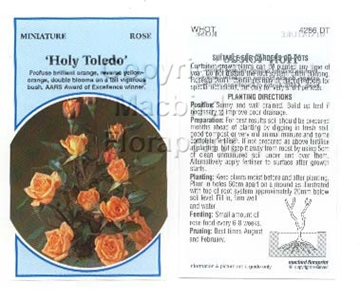 Picture of ROSE MINI HOLY TOLEDO