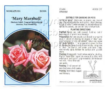 Picture of ROSE MINI MARY MARSHALL