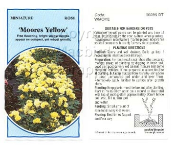 Picture of ROSE MINI MOORES YELLOW