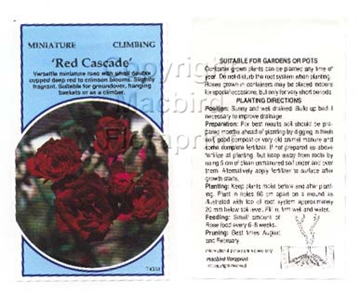 Picture of ROSE MINI RED CASCADE CLIMBING