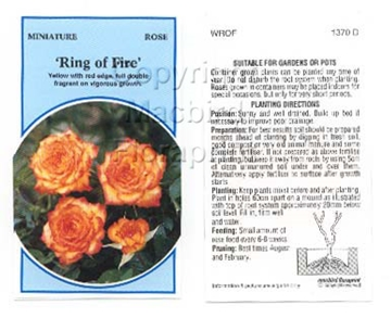 Picture of ROSE MINI RING OF FIRE