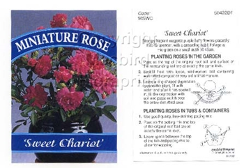 Picture of ROSE MINI SWEET CHARIOT