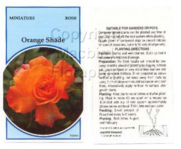 Picture of ROSE MINI ORANGE SHADE (UNNAMED VARIETY)